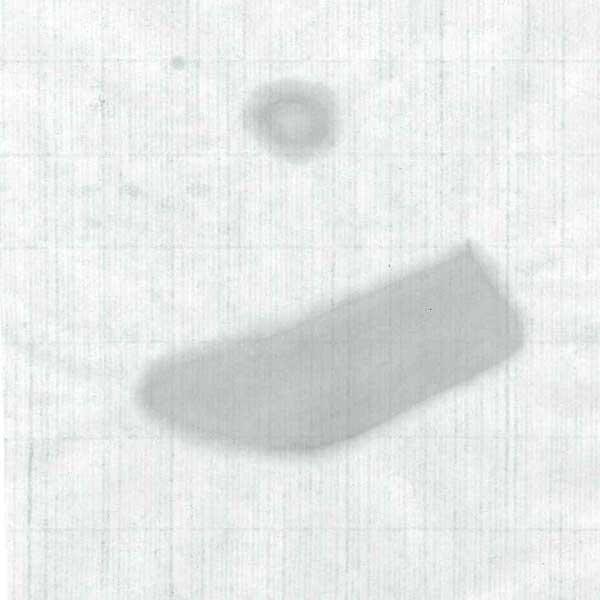 画仙紙 風神